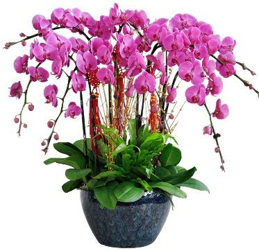 9 dallı mor orkide  Gaziantep çiçekçi telefonları