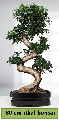 80 cm özel saksıda bonsai bitkisi  Gaziantep 14 şubat sevgililer günü çiçek