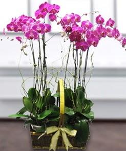 7 dallı mor lila orkide  Gaziantep cicek , cicekci