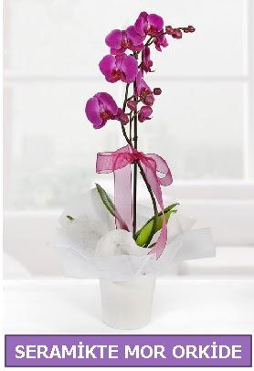 Seramik içerisinde birinci kalite tek dallı mor orkide  Gaziantep online çiçek gönderme sipariş