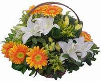 Gaziantep internetten çiçek siparişi  sepet modeli Gerbera kazablanka sepet