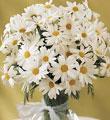 Gaziantep çiçek gönderme  mika yada cam vazoda papatya tanzim