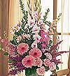 Gaziantep çiçek , çiçekçi , çiçekçilik  Tanzim Mevsim çiçeklerinden