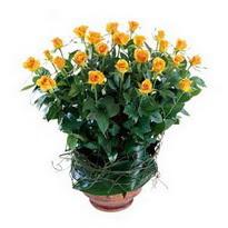Gaziantep çiçek yolla  10 adet sari gül tanzim cam yada mika vazoda çiçek