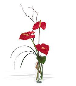 Gaziantep kaliteli taze ve ucuz çiçekler  cam yada mika Vazoda 3 adet  antoryum