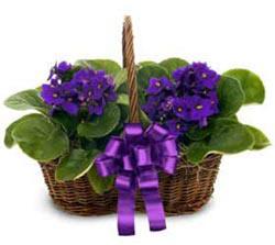 Gaziantep online çiçekçi , çiçek siparişi  sepette 2 adet menekse