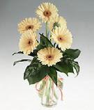 Gaziantep çiçek siparişi sitesi  cam yada mika vazoda 9 adet gerbera