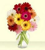 Gaziantep çiçek siparişi vermek  cam yada mika vazoda 15 özel gerbera