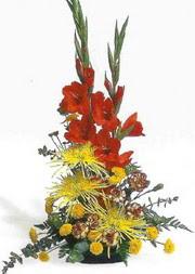 Gaziantep çiçek , çiçekçi , çiçekçilik  glayör ve mevsim çiçekleri