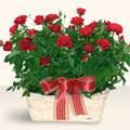 Gaziantep online çiçek gönderme sipariş  11 adet kirmizi gül sepette