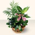 Gaziantep anneler günü çiçek yolla  5 adet canli çiçek sepette