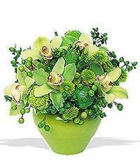 cam yada mika vazoda 5 adet orkide   Gaziantep internetten çiçek siparişi