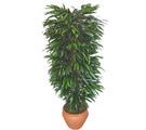 Gaziantep kaliteli taze ve ucuz çiçekler  Özel Mango 1,75 cm yüksekliginde