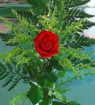 1 adet kirmizi gül buketi   Gaziantep çiçek yolla , çiçek gönder , çiçekçi