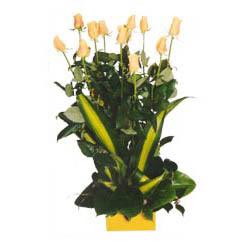 12 adet beyaz gül aranjmani  Gaziantep çiçek siparişi sitesi
