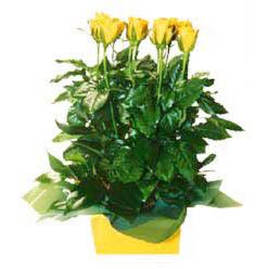 11 adet sari gül aranjmani  Gaziantep internetten çiçek siparişi