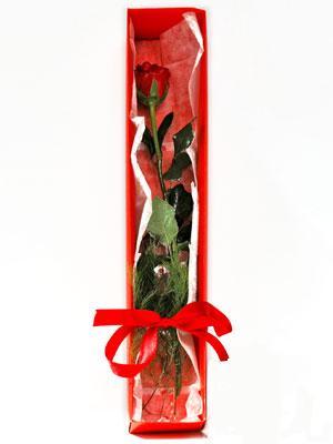 Gaziantep çiçekçiler  1 adet kutuda gül