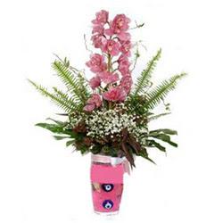 Gaziantep çiçek servisi , çiçekçi adresleri  cam yada mika vazo içerisinde tek dal orkide çiçegi
