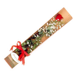 Gaziantep hediye sevgilime hediye çiçek  Kutuda tek 1 adet kirmizi gül çiçegi