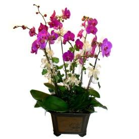 Gaziantep çiçek gönderme sitemiz güvenlidir  4 adet orkide çiçegi