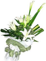 Gaziantep internetten çiçek satışı  3 dal kazablanka çiçegi ve yesillikler