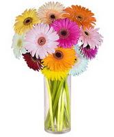 Gaziantep online çiçekçi , çiçek siparişi  Farkli renklerde 15 adet gerbera çiçegi