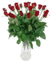 Gaziantep 14 şubat sevgililer günü çiçek  11 adet kimizi gülün ihtisami cam yada mika vazo modeli