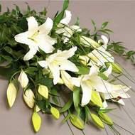 Gaziantep internetten çiçek satışı  3 adet kazablanka çiçegi
