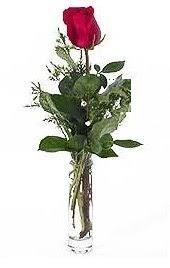 Vazo içerisinde 1 adet kirmizi gül  Gaziantep çiçek yolla