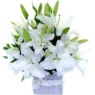 Gaziantep cicekciler , cicek siparisi  2 dal cazablanca vazo çiçeği