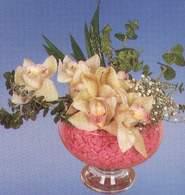 Gaziantep çiçekçi mağazası  Dal orkide kalite bir hediye