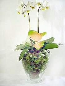 Gaziantep anneler günü çiçek yolla  Cam yada mika vazoda özel orkideler