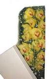Gaziantep uluslararası çiçek gönderme  Kutu içerisine dal cymbidium orkide