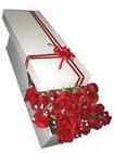 Gaziantep 14 şubat sevgililer günü çiçek  11 adet 1.kalite magnum güller