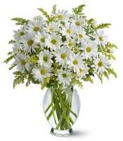 Vazo içerisinde beyaz krizantem çiçekleri  Gaziantep çiçek mağazası , çiçekçi adresleri