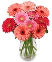 vazo içerisinde 13 adet gerbera çiçeği  Gaziantep kaliteli taze ve ucuz çiçekler