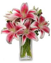 Vazo içerisinde 5 dal kazablanka çiçeği  Gaziantep çiçek yolla