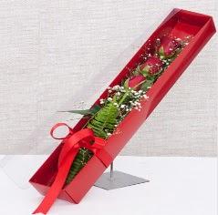 Kutu içerisinde 3 adet kırmızı gül  Gaziantep İnternetten çiçek siparişi