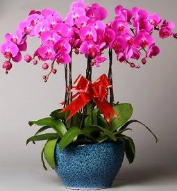 7 dallı mor orkide  Gaziantep ucuz çiçek gönder