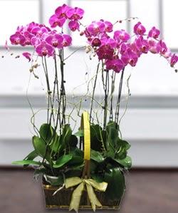 4 dallı mor orkide  Gaziantep internetten çiçek satışı