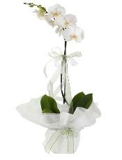 1 dal beyaz orkide çiçeği  Gaziantep çiçek yolla , çiçek gönder , çiçekçi