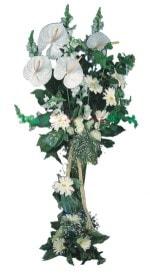 Gaziantep çiçekçi mağazası  antoryumlarin büyüsü özel