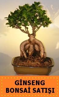 Ginseng bonsai satışı japon ağacı  Gaziantep çiçek gönderme sitemiz güvenlidir