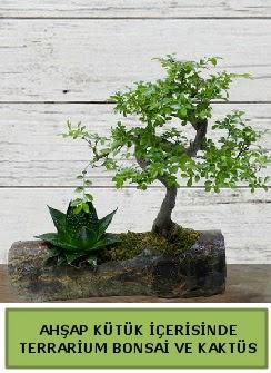 Ahşap kütük bonsai kaktüs teraryum  Gaziantep online çiçekçi , çiçek siparişi
