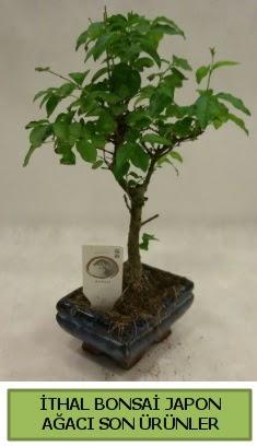 İthal bonsai japon ağacı bitkisi  Gaziantep çiçek , çiçekçi , çiçekçilik