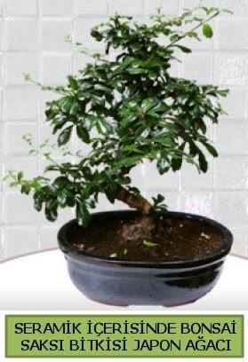 Seramik vazoda bonsai japon ağacı bitkisi  Gaziantep kaliteli taze ve ucuz çiçekler