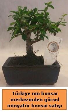 Japon ağacı bonsai satışı ithal görsel  Gaziantep cicekciler , cicek siparisi