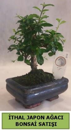 İthal japon ağacı bonsai bitkisi satışı  Gaziantep 14 şubat sevgililer günü çiçek