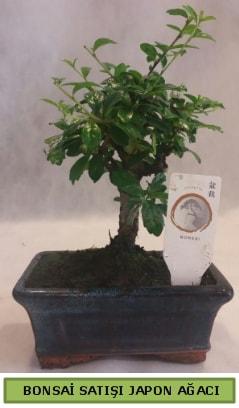 Minyatür bonsai ağacı satışı  Gaziantep uluslararası çiçek gönderme
