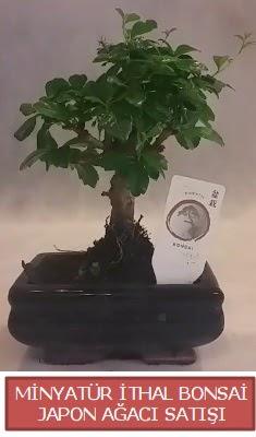 Küçük görsel bonsai japon ağacı bitkisi  Gaziantep hediye sevgilime hediye çiçek